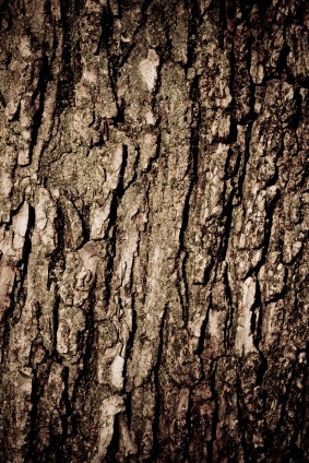Pine Bark (Pycnogenol) Health Benefits