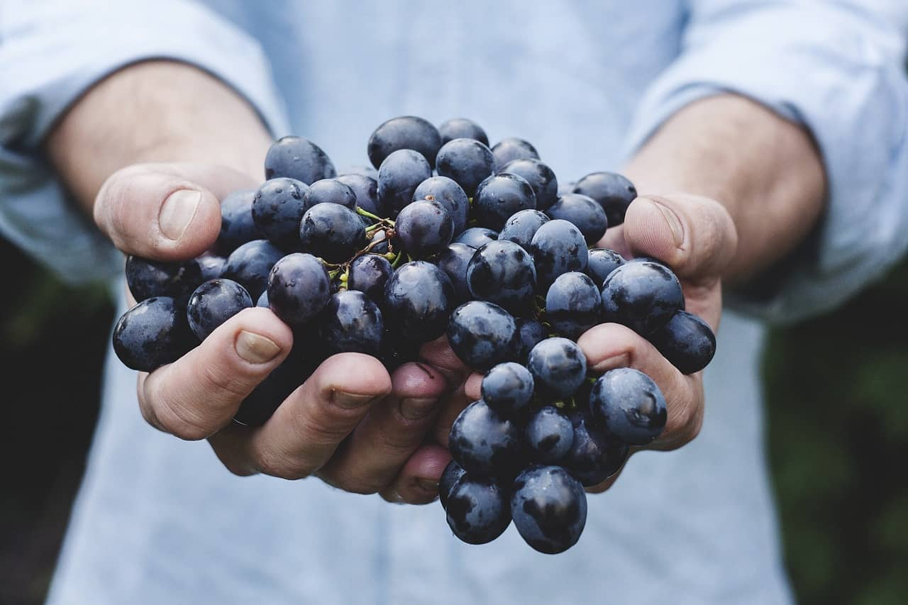 grapes help fight prostate cancer