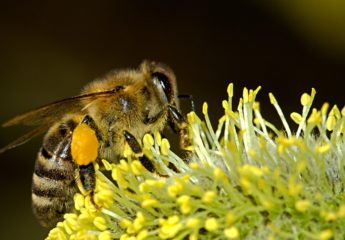 Bee pollen extract helps treat CP/CPPS