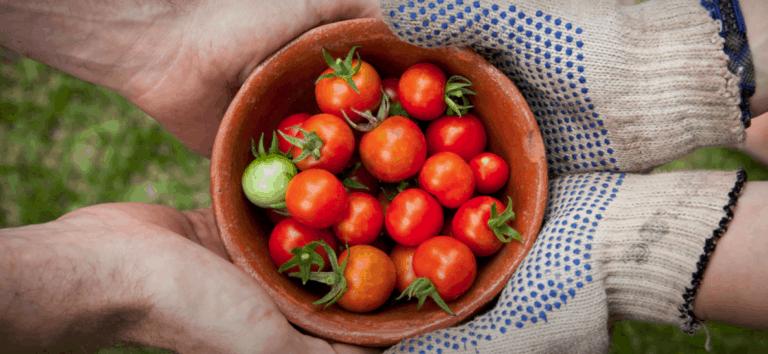 Tomato Benefits for Prostate Health