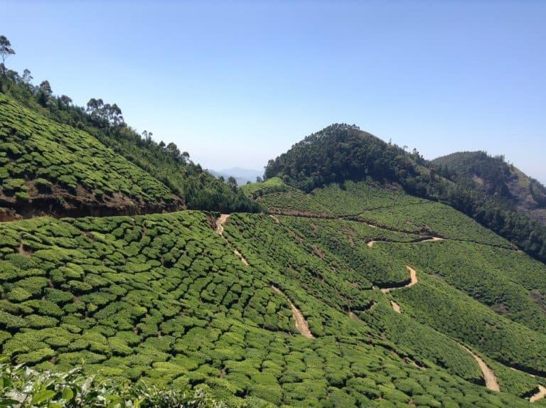 How Does Green Tea Help in Retirement?
