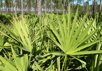 saw palmetto for prostatitis treatment