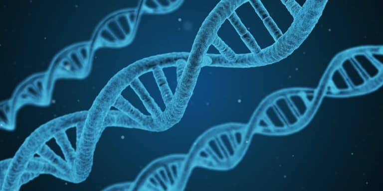How Breast Cancer Genes Impact Prostate Cancer Growth