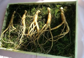 Should you try ginseng for erectile dysfunction