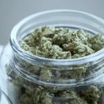 Health Effects of Marijuana According to the Institute of Medicine