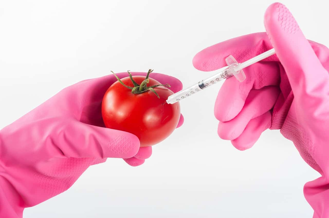 6 ways you can avoid GMO foods