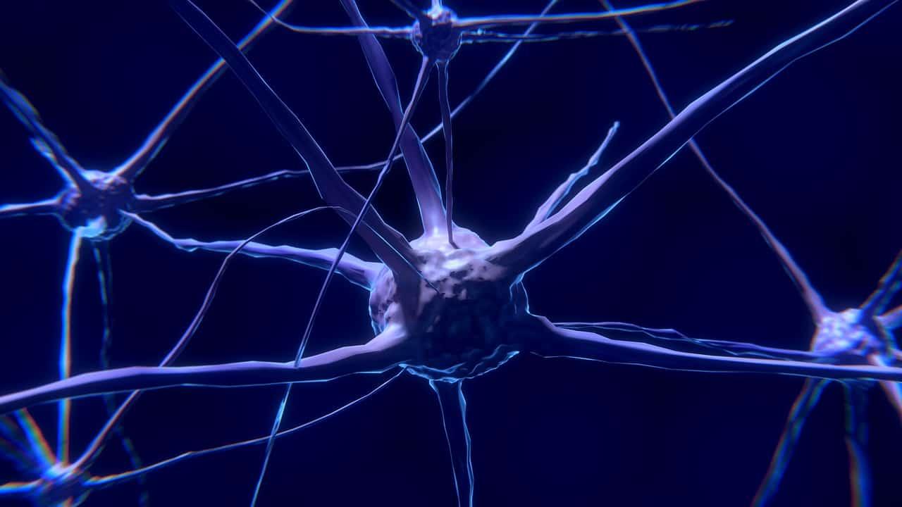 Which Foods Help Prevent Alzheimer's?