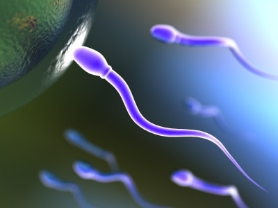 Sperm Counts Continue to Decline Globally – Here's Why