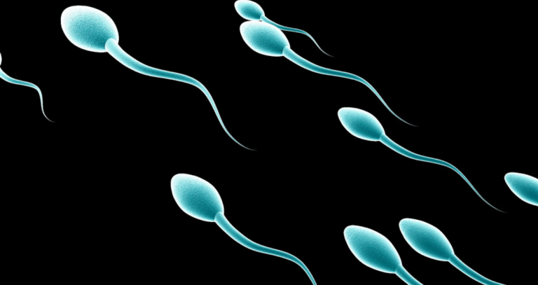 What is a Sperm Morphology Test?