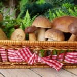 How Mushrooms Protect Against Prostate Cancer