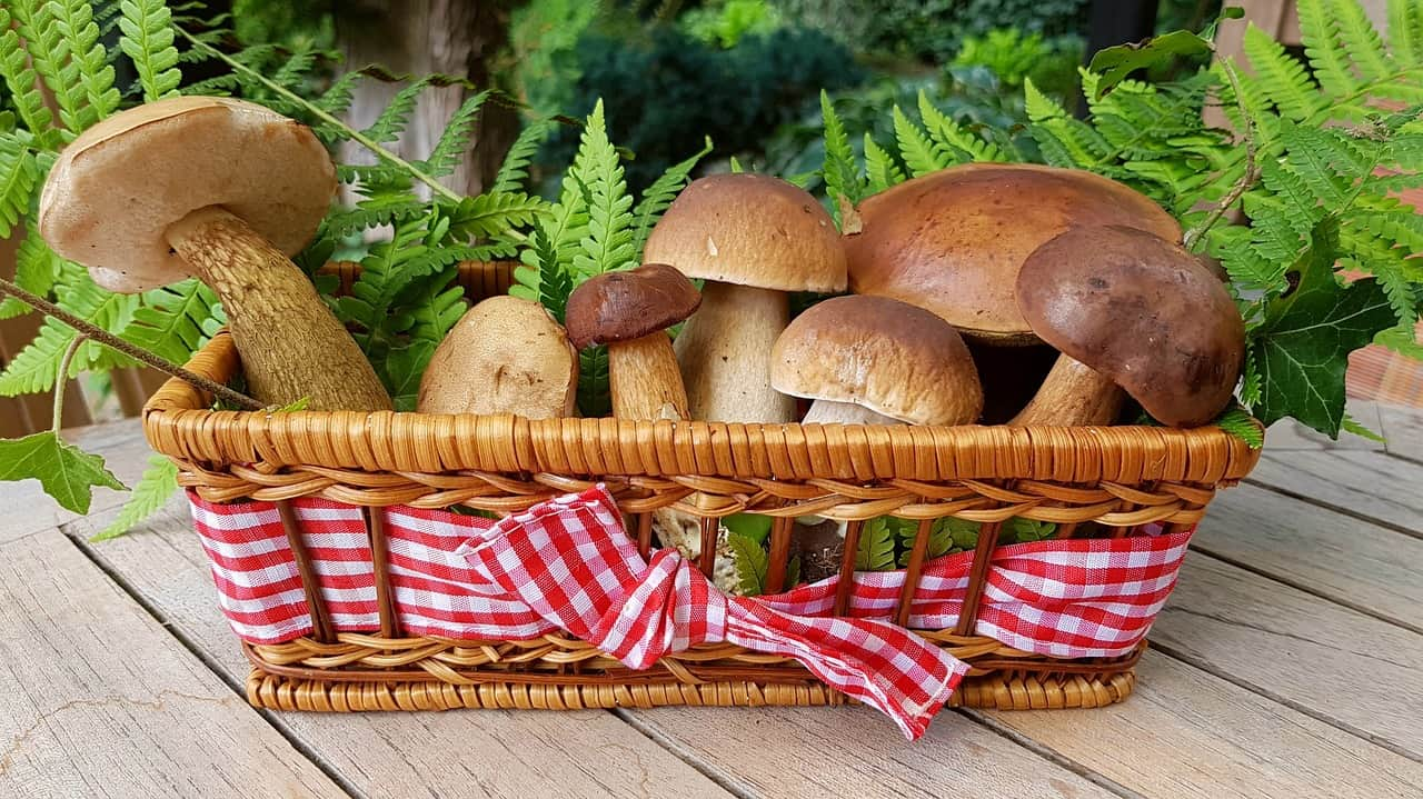 Mushrooms fight against prostate cancer