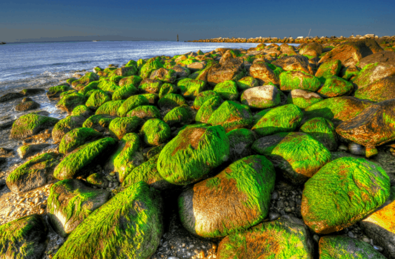 This Algae Can Boost Your Sex Life
