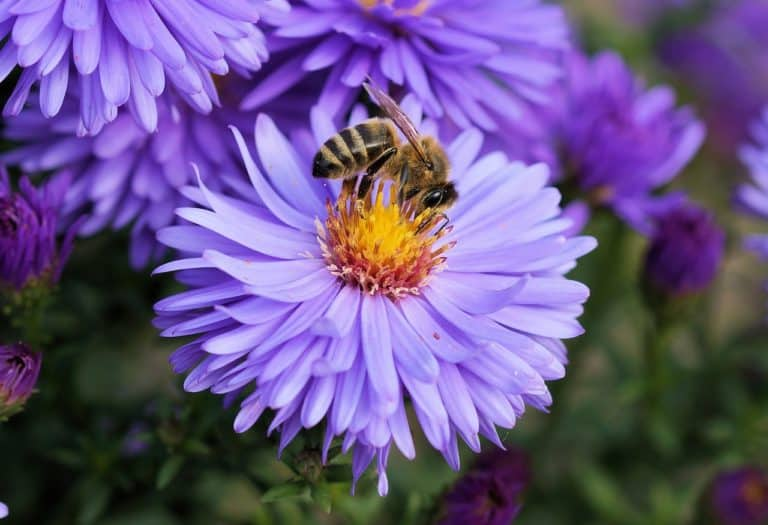 Using Pollen Extract for Male Pelvic Pain Relief